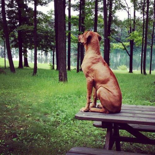 speakabledog (5)