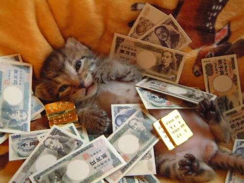 moneycat2