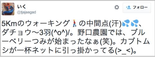 kabutomushi3