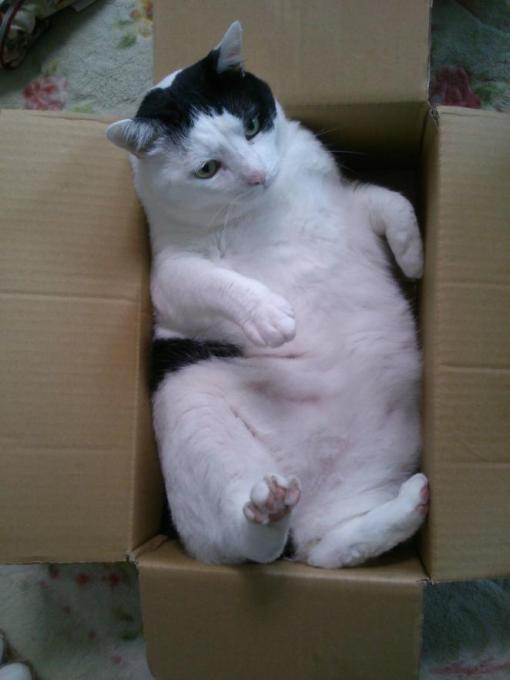 bigcat (3)