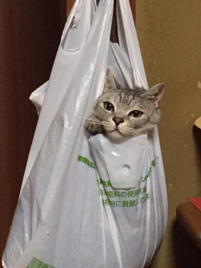 cat_escape3