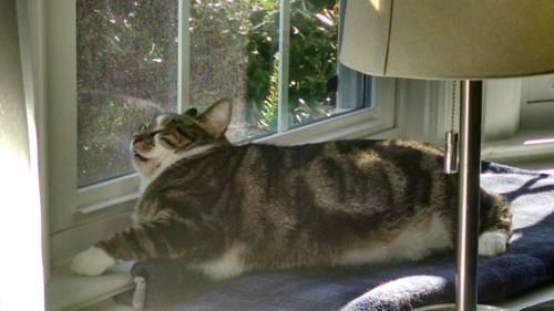 cat_petreason (5)
