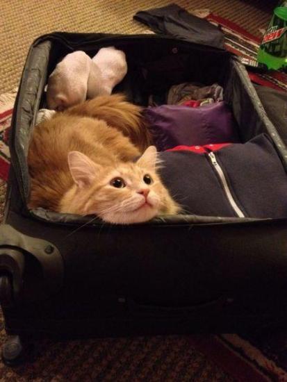 cat_petreason (9)