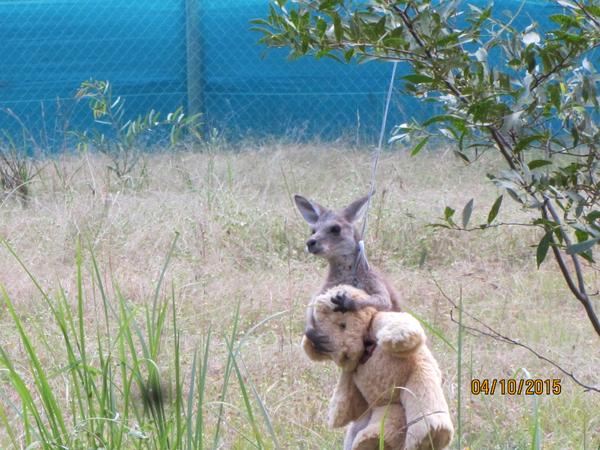 kangaroo_jooy (1)