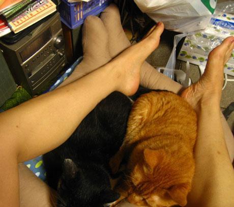 catbed_legs (3)