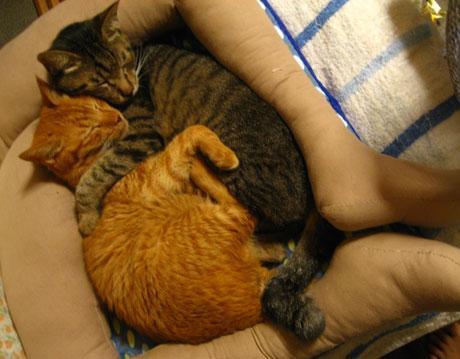 catbed_legs (6)