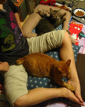 catbed_legs (8)