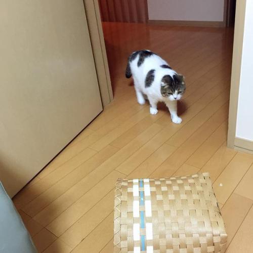 catbrother (3)