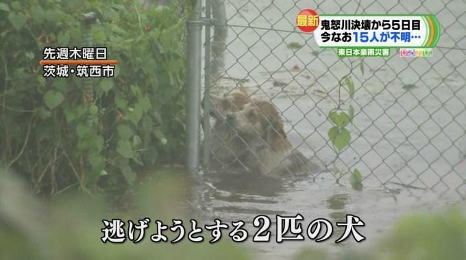 kinugawa_dogs1