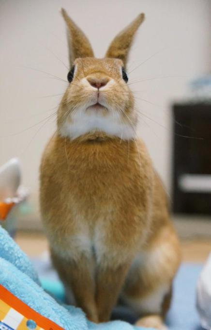 rabbit_facelift (7)