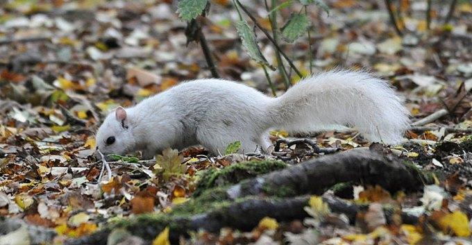 1027white_squirrel1