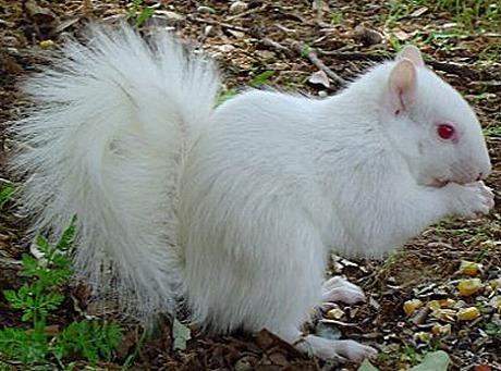 1027white_squirrel6