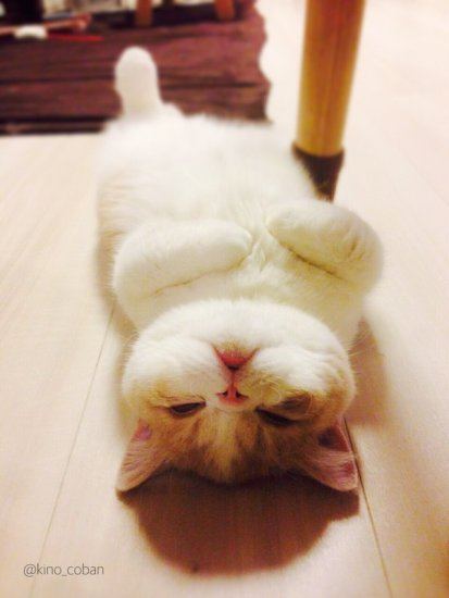 cat_yukadanbou4