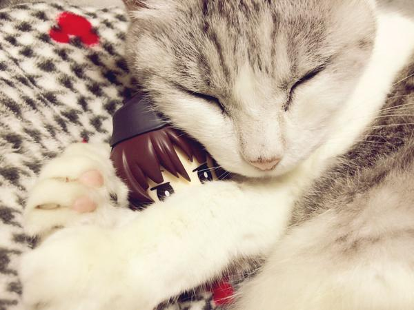 catlife (11)