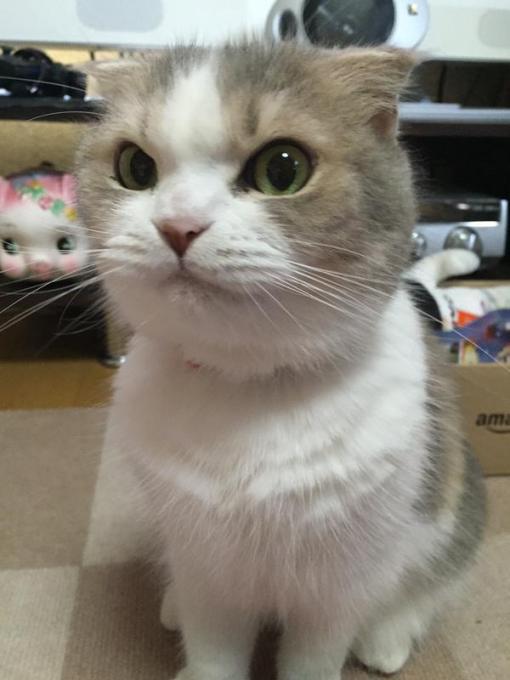 catlife (8)