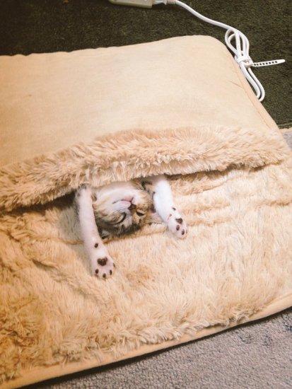 hotcat_sleep (2)