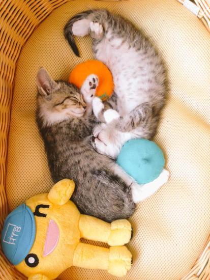 hotcat_sleep (5)