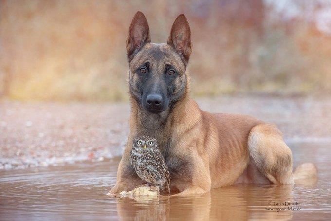 1108dog_owl13