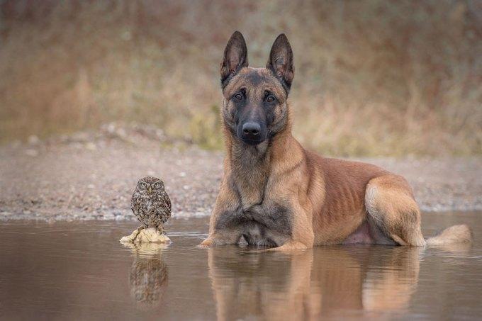 1108dog_owl8