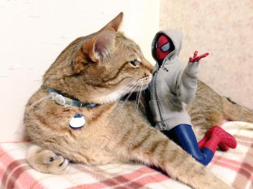 1124cat_spiderman19