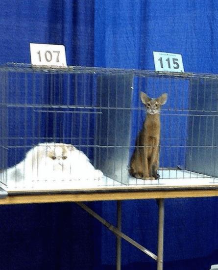 cat_liquid8