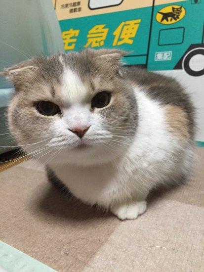 cat_money1