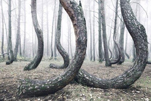 crooked_tree1