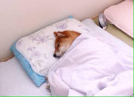 dog_sleep4