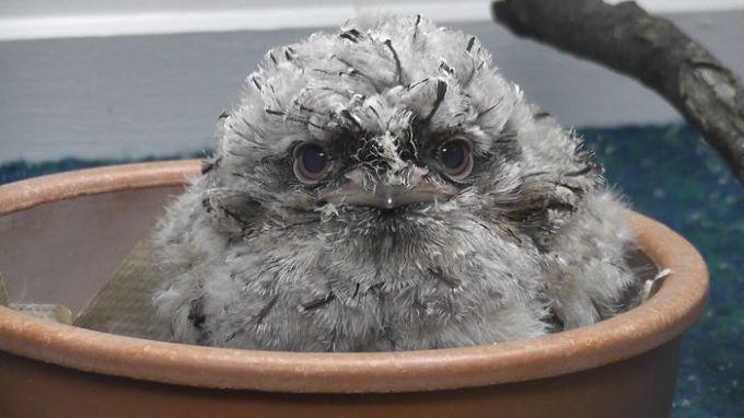 1201cutest_owl1