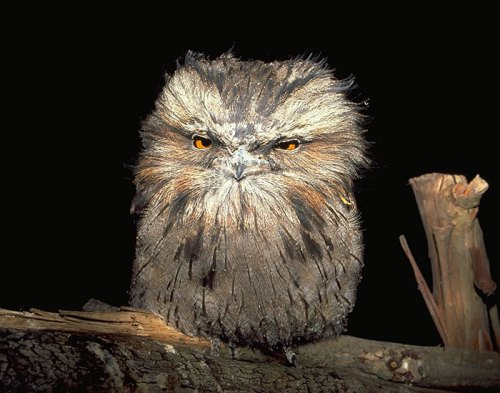 1201cutest_owl11