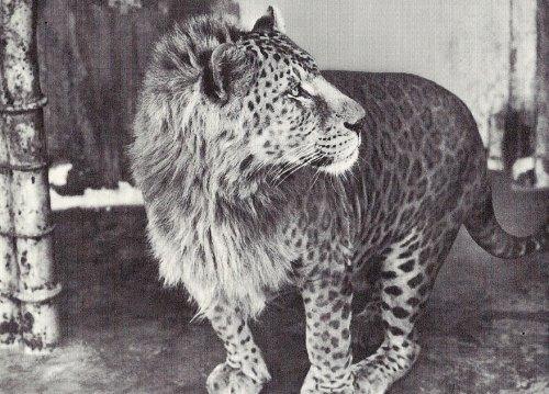 1218hybrid_animals16