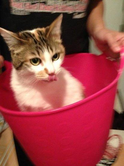 bathcat (1)