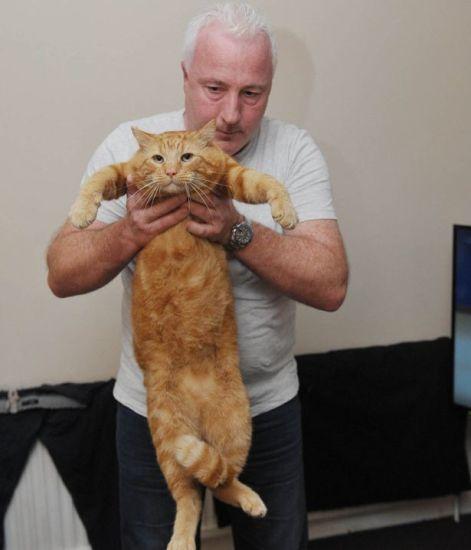 cat_bigmac2