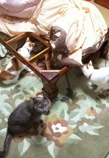 cat_kotatsu3