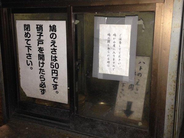 pigeon_oosukannon (3)