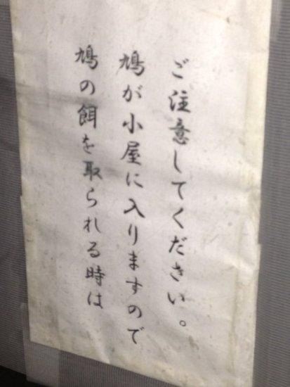 pigeon_oosukannon (4)