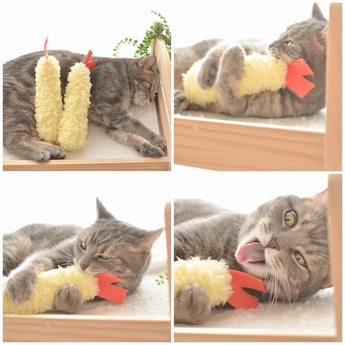 happycat (12)