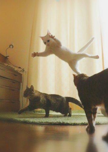 happycat (7)