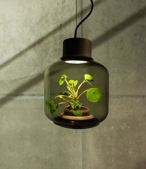 PlantsLamp (2)