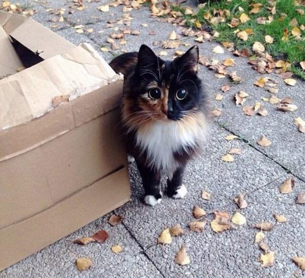 blind-cat-chimera-calico-jasmine-sandra-coudray-8