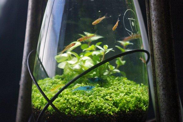 lamp_watertank1