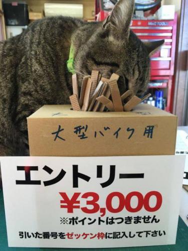 okegawa_cats_05