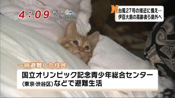 saigai_animal (4)