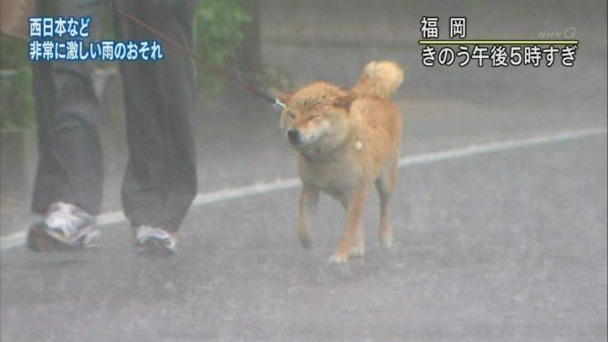 saigai_animal (5)