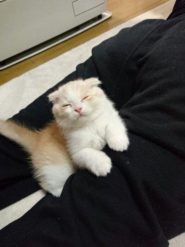 unagi_cat_04