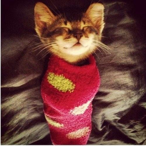 foota_cat2