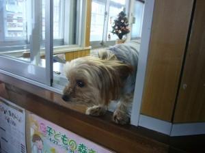 inu_kaisatsu7