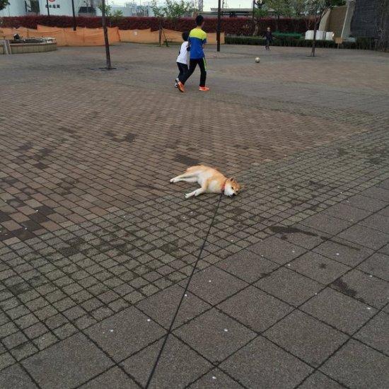 tareodog (1)