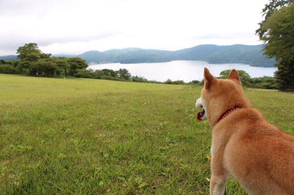 tareodog (2)