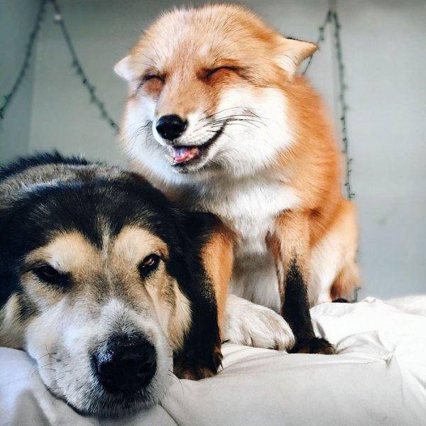fox_bestfriend5